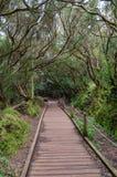 Ίχνος πεζοπορίας στο δάσος Anaga, Tenerife στοκ εικόνες