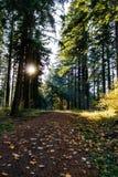 Ίχνος ποδηλάτων βουνών στο δάσος με τις ακτίνες ήλιων που ρέουν μέσω τ στοκ φωτογραφίες με δικαίωμα ελεύθερης χρήσης