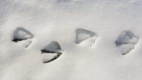 Ίχνος πουλιών στο χιόνι Στοκ Φωτογραφίες