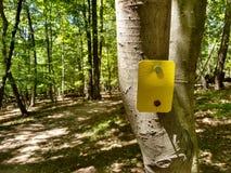 Ίχνος που καίγεται σε μια πορεία πεζοπορίας μέσω των ξύλων Στοκ εικόνες με δικαίωμα ελεύθερης χρήσης