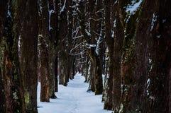 Ίχνος που καλύπτεται από το χιόνι Στοκ Φωτογραφίες