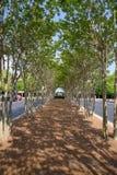 Ίχνος σηράγγων δέντρων στο εταιρικό κτήριο Στοκ φωτογραφία με δικαίωμα ελεύθερης χρήσης