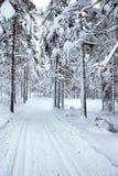 ίχνος σκι Στοκ Φωτογραφίες