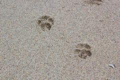 Ίχνος σκυλιού στην άμμο Στοκ Φωτογραφίες
