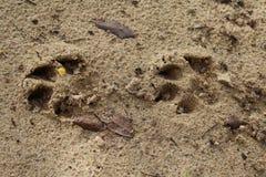 Ίχνος σκυλιών Στοκ εικόνα με δικαίωμα ελεύθερης χρήσης