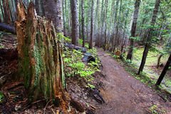 Ίχνος στα δάση στοκ φωτογραφίες