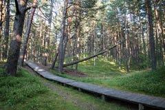 Ίχνος στα ξύλα κοντά στη θάλασσα στους αμμόλοφους Στοκ εικόνα με δικαίωμα ελεύθερης χρήσης
