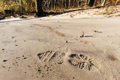 Ίχνος στην άμμο Στοκ Εικόνες