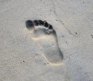Ίχνος στην άμμο Στοκ Φωτογραφίες