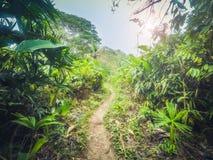 Ίχνος στη ζούγκλα/διαδρομή ρύπου μέσω του δάσους - Στοκ εικόνες με δικαίωμα ελεύθερης χρήσης