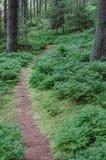 Ίχνος στους θάμνους βακκινίων Στοκ φωτογραφία με δικαίωμα ελεύθερης χρήσης