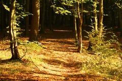 Ίχνος στο δάσος φθινοπώρου Στοκ εικόνες με δικαίωμα ελεύθερης χρήσης