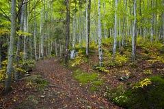 Ίχνος στο δάσος μια θερινή ημέρα Στοκ εικόνες με δικαίωμα ελεύθερης χρήσης