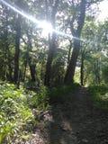 Ίχνος στο δάσος που φωτίζεται από τον ήλιο στοκ εικόνες