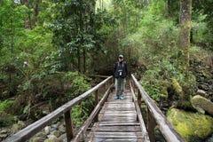 Ίχνος στο εθνικό πάρκο του Vicente Perez Rosales, Χιλή στοκ φωτογραφίες με δικαίωμα ελεύθερης χρήσης