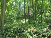 Ίχνος στο θερινό περίπατο αποβαλλόμενων δασών wildlife στοκ φωτογραφία με δικαίωμα ελεύθερης χρήσης