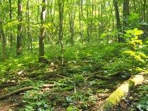 Ίχνος στο θερινό περίπατο αποβαλλόμενων δασών wildlife στοκ εικόνες