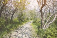 Ίχνος στο πάρκο Στοκ εικόνες με δικαίωμα ελεύθερης χρήσης
