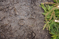 Ίχνος στο ρύπο Καφετής οδικός ρύπος με τα ίχνη Σύσταση φωτογραφιών υποβάθρου Σημάδι ποδιών στο ίχνος ζουγκλών shoeprints Στοκ φωτογραφίες με δικαίωμα ελεύθερης χρήσης