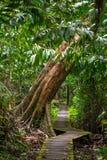 Ίχνος στο τροπικό δάσος, εθνικό πάρκο Bako στοκ φωτογραφία με δικαίωμα ελεύθερης χρήσης