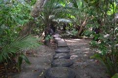 Ίχνος στο τροπικό τροπικό δάσος της Κόστα Ρίκα Στοκ Εικόνες