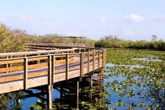 Ίχνος στο Everglades Στοκ φωτογραφία με δικαίωμα ελεύθερης χρήσης