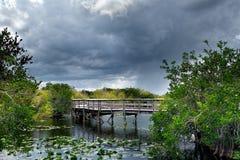 Ίχνος στο Everglades Στοκ εικόνες με δικαίωμα ελεύθερης χρήσης