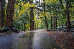 Ίχνος στο Forrest στο εθνικό πάρκο Yosemite Στοκ Εικόνες