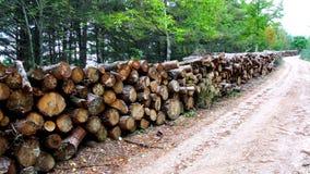 Ίχνος του ξύλου Στοκ Εικόνες