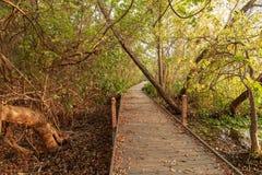 Ίχνος φύσης SAN Marcos στοκ εικόνα με δικαίωμα ελεύθερης χρήσης