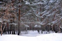 Ίχνος χιονιού στο χειμερινό δάσος στοκ φωτογραφία