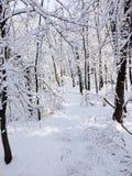 Ίχνος χιονιού Στοκ φωτογραφίες με δικαίωμα ελεύθερης χρήσης