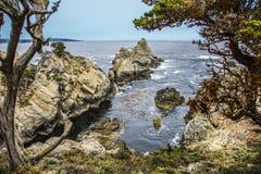Ίχνος όρμων της Κύπρου στο σημείο Lobos, μεγάλη ακτή sur σε Καλιφόρνια Στοκ Εικόνες