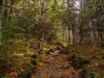 Ίχνος Adirondacks το φθινόπωρο στοκ φωτογραφία