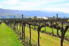 Ίχνος Queenstown, Νέα Ζηλανδία κρασιού στοκ εικόνες