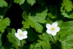 αέρας λουλουδιών Στοκ φωτογραφία με δικαίωμα ελεύθερης χρήσης