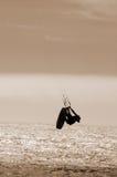 αέρας που παίρνει τη σέπια &kap Στοκ εικόνα με δικαίωμα ελεύθερης χρήσης