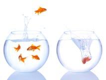 αέρας goldfishes στοκ εικόνες