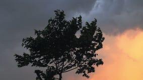 Αέρας Stong πριν από τη θύελλα βροντής στο βράδυ φιλμ μικρού μήκους