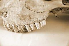 Αίγα οδοντοστοιχιών Στοκ εικόνα με δικαίωμα ελεύθερης χρήσης