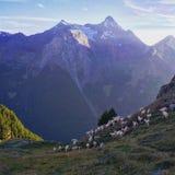 Αίγες μπροστά από τα βουνά στοκ φωτογραφίες