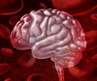 Αίμα εγκεφάλου Στοκ Εικόνες