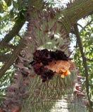 Αίμα του δέντρου στοκ εικόνες με δικαίωμα ελεύθερης χρήσης
