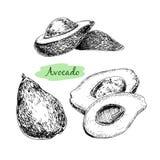 Αβοκάντο απεικόνιση αποθεμάτων