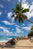 Αβλαβής τροπική παραλία στη Σρι Λάνκα Στοκ εικόνες με δικαίωμα ελεύθερης χρήσης