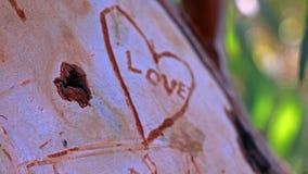 αγάπη αέρα Στοκ Φωτογραφίες