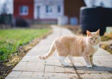 Αγάπη γατακιών Στοκ εικόνες με δικαίωμα ελεύθερης χρήσης