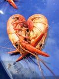 Αγάπη για τους αστακούς Στοκ εικόνα με δικαίωμα ελεύθερης χρήσης