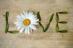 Αγάπη επιγραφής, που ευθυγραμμίζεται με chamomile και τα φύλλα σε ένα ξύλινο υπόβαθρο Στοκ Φωτογραφία