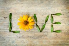 Αγάπη επιγραφής, που σχεδιάζεται μιας κίτρινης μαργαρίτας και των φύλλων σε ένα ξύλινο υπόβαθρο Αγάπη έννοιας της φύσης, περιβάλλ Στοκ φωτογραφία με δικαίωμα ελεύθερης χρήσης
